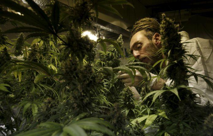 [LISTEN] Marijuana in SA: Is it really legal?