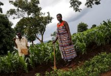 Irrigation farming in a Malawian village has helped ward off malnutrition and starvation