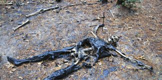 Inside the 'dead zone': In an outdoor laboratory at Texas' Sam Houston State University