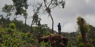 A man looks out over a newly cleared area of forest at Kahuzi-Biéga national park near Bukavu, Democratic Republic of the Congo. (Kate Holt, The Guardian)