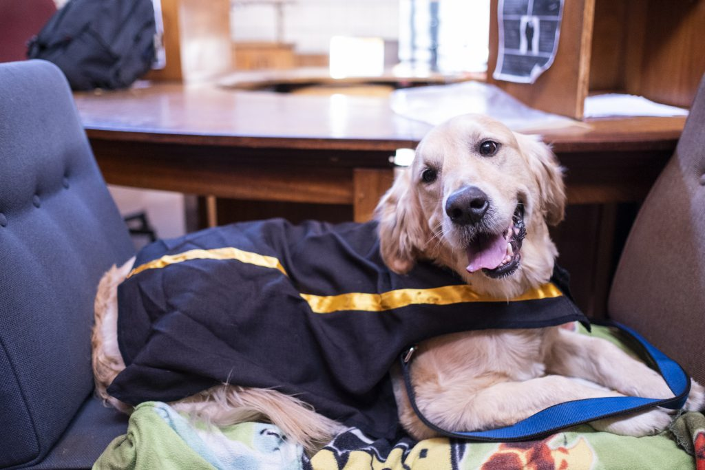Therapy dogs from Top Dogs are dressed up as role players in the Krugersdorp Magistrates Court to showcase how court proceedings work to children that have to testify in court.  In this photograph Flake is dressed up as the State Prosecutor.