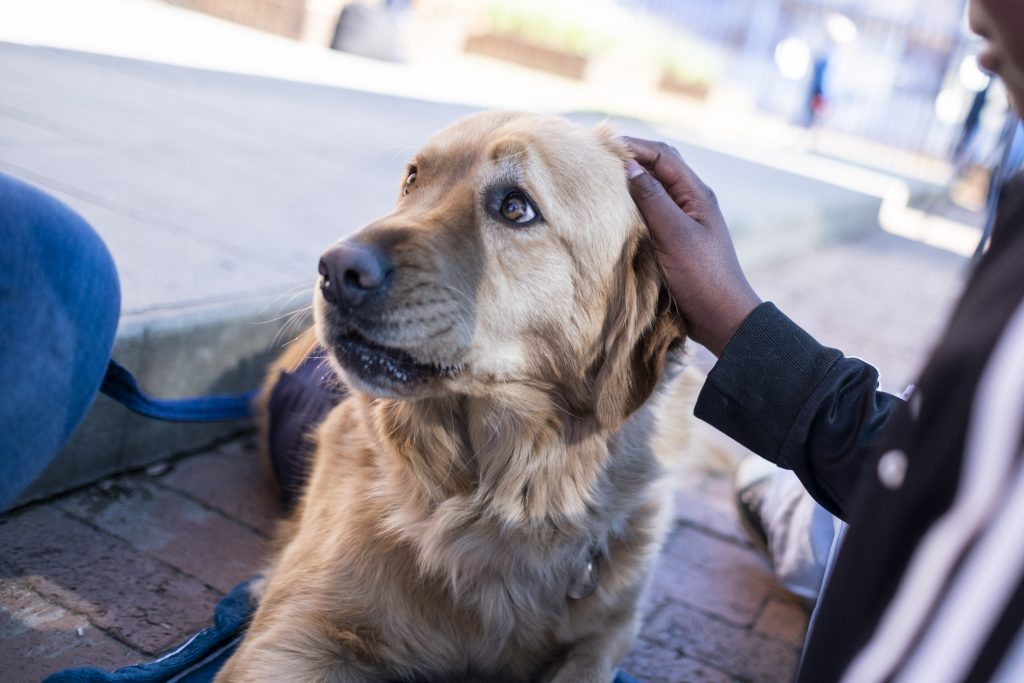 Child pets therapy dog