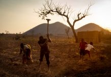 A family working in Malawi's tobacco fields.